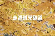 邳州的银杏时光隧道