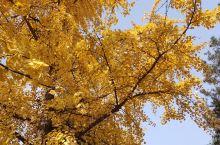 西安城墙秋色