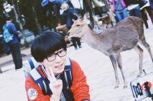 奈良看鹿 奈良喂鹿攻略 日本旅游必打卡 来日本一定要看的,这是一个人与神共生的国度。zzz 奈良公园