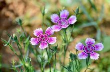 花草知春不久归,百般红紫斗芳菲