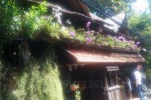 在网上看到来普吉岛推荐的这家自然餐厅。餐厅环境正如其名,被绿色植物包围着,沿着店家自行搭建的木梯往上