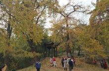 随州千年银杏谷,地处随州洛阳镇,景区内有很多银杏树,千年以上的据说有308棵,我们过来的时候可能还没