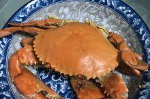 一个盘子只能装一只螃蟹,好大的海蟹
