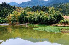 走进云水谣(二) 云水谣古镇历史悠久,古镇青山绿水环绕,几百年到上千年的大榕树种置在围绕着古镇的河道