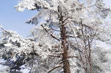 南方孩子第一次见雪,又想着回来过年,特意选了西岭雪山,景色惊艳每颗数都是傲骨的,静态的美,照片都形容