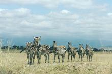 东非大草原
