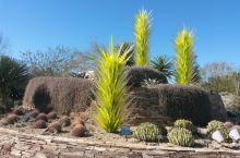 凤凰城的沙漠植物园里收集了很多美丽的沙漠植物,绝对值得去开开眼界