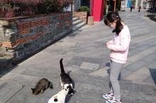 蜀山半边街非常值得去,我和女儿经常去溜达,因为对面就是医院,每次打完狂犬疫苗后就带她去溜达。她居然被