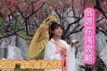 感受广东最美的春天,翁源花海赏花攻略  最近这段时间,北方很多城市的气温还在零下,人们还披着棉袄冬衣