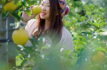 在日本东北地区大馆的农家田园生活体验,算是与众不同的深度日本游。去阳光灿烂的苹果园中采摘苹果,品尝不