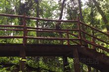 回忆去年去湖南张家界国家森林公园时,在那里的山林间,看到可爱的猕猴,它们一会在树上爬上爬下,一会在岩
