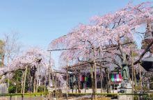 茨城县水户市的六地藏寺算是只有本地人才知道的小众景点了,跟随不起眼的指示牌沿着羊肠小路往山的方向行走