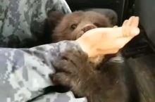 可爱的小熊 动物是人类的好朋友[握手]