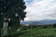在最后的江南秘境——松阳,有这样一个茶园,空气清新,环境清幽,是骑行的乐土,还有网红茶室,对着青山绿