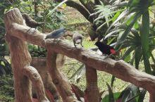 Hotel Los Lagos 动物特辑!酒店丰富的动植物资源,一个早晨在酒店里看到了各种各样的鸟,