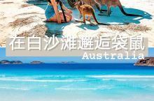 澳大利亚小众景点邂逅西澳白沙滩上的袋鼠群 · 墨客旅行带你打卡澳新地区小众景点~ 西澳大利亚一直被称