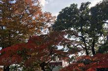 工作原因去了都趟首尔,坦白说未能发掘到很惊喜的环节,名洞是条很老旧的步行街,景福宫也粗糙得有负皇宫之