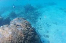 父子俩找到了小丑鱼的家,昨天停泊岛也看到了好多小丑鱼,珊瑚更美