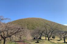 海拔580米的单成火山在4000年前爆发形成了大室山又称抹茶山,城琦海岸的奇观也是大室山的熔岩所致!