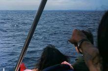 一早就出门观鲸了,海浪很大,很多人都吐了。就看到一点点尾巴。