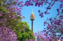 悉尼塔眼Sydney Tower Eye  悉尼塔眼入口位于悉尼西田购物中心 (Westfield