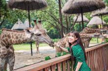 长隆野生动物园,在这里看动物百态      长隆野生动物园,是亚洲最大的野生动物园,是国内动物品种最