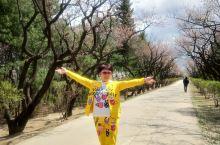 """这个""""五一""""不一般,探秘朝鲜遇见春天"""