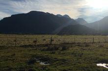 天然大牧场。在新西兰这几天天天牛奶是必喝。