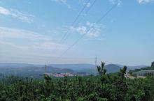 位于山东省安丘市西南乡镇的樱桃种植园 到了可以随便摘着吃,带走需付钱,哈哈。