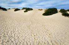 在南澳洲的袋鼠岛上有一块神奇的白色沙漠,它距离大海有数公里远,周围生长着灌木植物,景色迷人,这片岛上