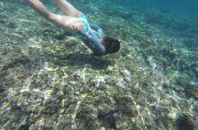 达沃塔里库岛自由潜,水清,浪小,珊瑚多