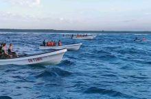 坦桑尼亚桑给巴尔岛出海观海豚