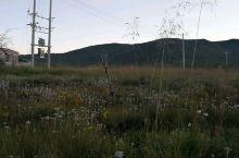 香格里拉草原野花盛开了。