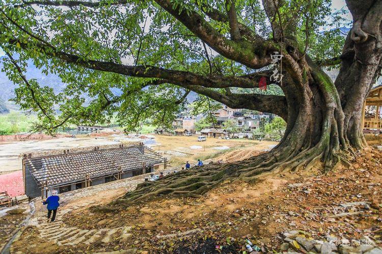 Bamei Village4