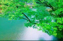 武夷山风景如画,人宛如画中游,好山,好水,出好茶,游山戏水,慢悠游,品茶,赏印象大红袍,你累了吗!!