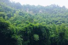 竹海空气不错,我们去的时候人不多,很安静,有游览车(是当地人做导游),可以直接坐车上山,沿路有很多小