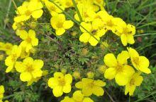 """焉支山有""""河西小黄山""""之称,是远近闻名的消夏避暑胜地。全林区植物有1千多种。四季常青的森林,为野生动"""