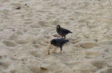 沙滩的沙子有点粗 不过不妨碍人民的玩乐