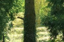 你是参天大树就当顶天立地,我是无名小草也当默默放香