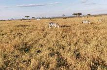 东非大草原。