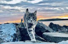 冰岛的猫....