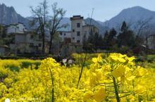 家朋与灵山梯田。春日的皖南处处是画,步步皆静,心旷神怡。