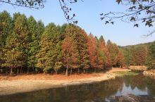 初秋的燕雀湖已是秋意阑珊,而它旁边的这条道路让人想起了爱情隧道。