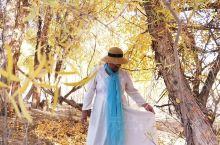 相比额济纳胡杨林,我更喜欢金塔胡杨林!虽然都说额济纳胡杨林给人一种沧桑感,但金塔胡杨林的景色更漂亮!