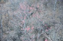 这个季节还有这种颜色,应该不是假的,第一张肯定不是。