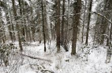 凉爽的天气,美丽的黄龙,早上8点赶到,坐缆车上山时候还是厚厚的积雪,从缆车口出来走了走了2公里到五彩