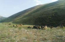 这时的乌兰察布,久旱未雨,蝗虫遍布草原。