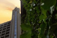这是一家高隆湾海边的酒店,文昌南国温德姆花园酒店,顾名思义,酒店环境很棒,绿油油的爬山虎,红艳艳的三