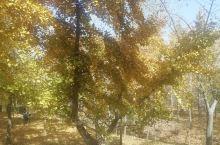 最美的季节,最美的风景, 银杏时光隧道