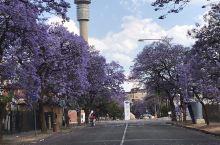 南非最著名的花园大道-打卡